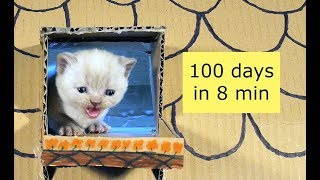 Kittens Time Lapse   100 Days In 8 Minutes 4K
