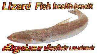 கிழங்கான் மீன் நன்மைகள்|benefits of lady fish