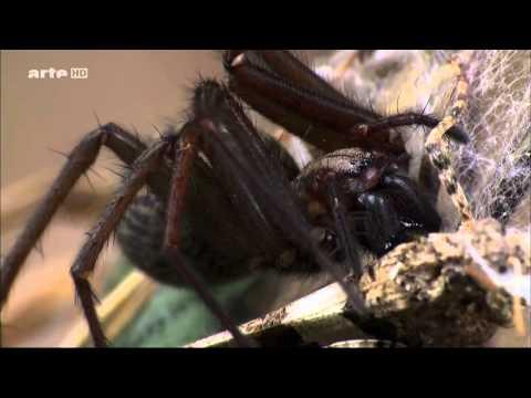 Super Spider (DOKU german)