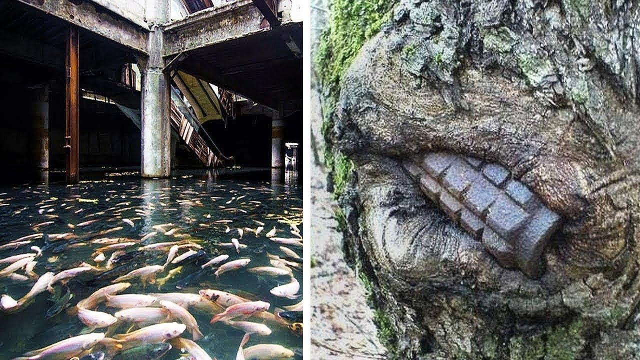 นี้คือสิ่งที่พิสูจน์ว่า..ธรรมชาติน่าเหลือเชื่อกว่าที่คุณคิด