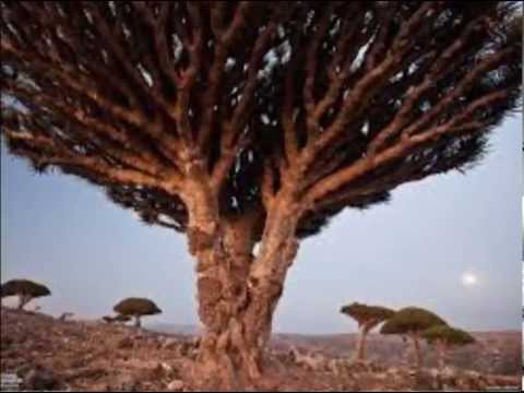Socotra (Yemen) The Aliens Island
