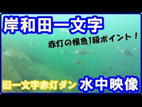 岸和田 渡船 釣果