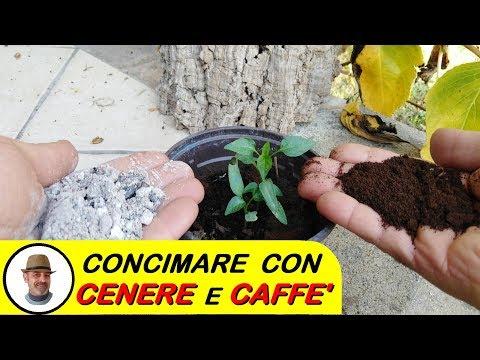 CONCIMARE CON LA CENERE E CAFFE'