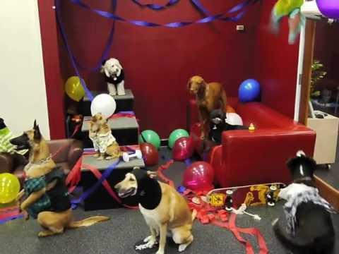 Harlem Shake - Dog Party Version (Original)