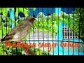 Pancingan Sanger Bahan  Mp3 - Mp4 Download