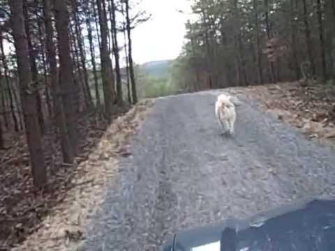 Long Driveway Paving