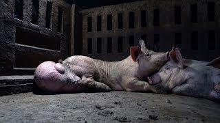 Schweinehölle in Spanien: Animal Equality deckt Tierqual hinter Wurst auf