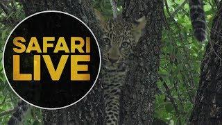 safariLIVE - Sunrise Safari - May, 18. 2018 thumbnail