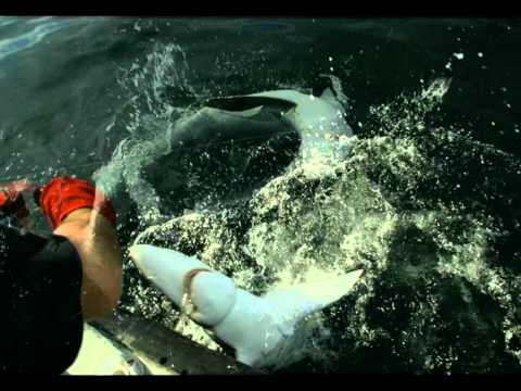 OFFSHORE WATERSPORTS SHARK SAFARI