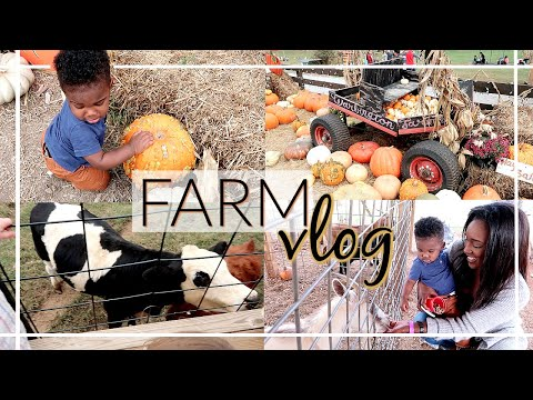 I'M BACK!! | DAY IN THE LIFE ON THE FARM | KRISTA BOWMAN RUTH