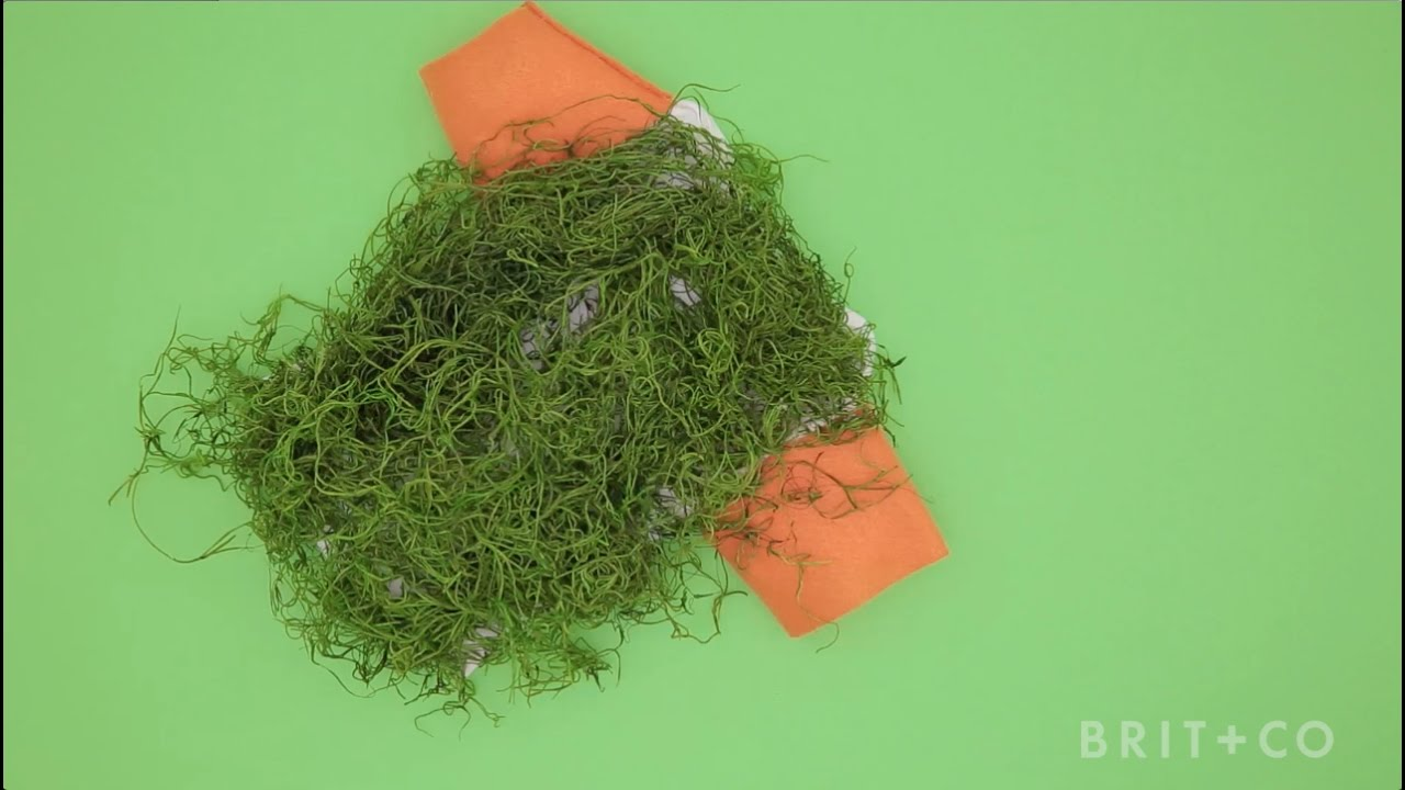How To Diy A Chia Pet Dog Costume You