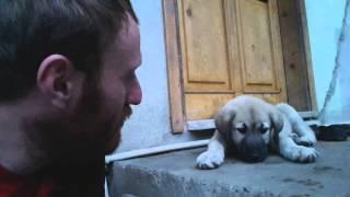 Ağlayan köpek yavrusu :(