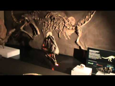 Event : Dinosaur Exhibition @ The  Australian Museum, Sydney