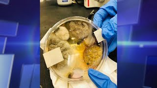 Restroom Hand Dryers Breed Bacteria?