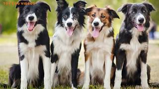 7 Of The Most Obedient Dog Breeds