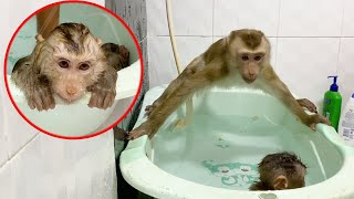 Dad Training Monkey DouDou Sit In The Water And Bathing
