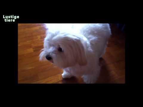 Lustige Hunde haBen zu baden – Hunde mogen nicht Baden Compilation 2014 mochte nicht