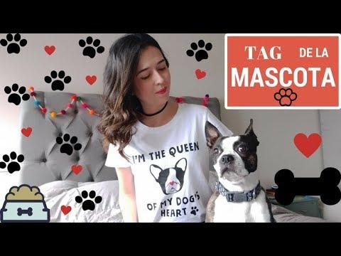 Boston Terrier Raza imagen mascota ID tag