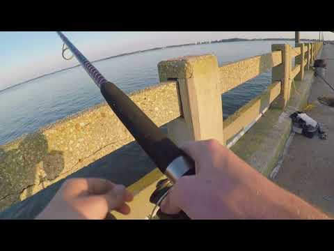 Rockfish, Rays, & Catfish Fishing - Cambridge, Maryland