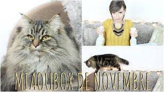 MIAOUBOX DE NOVEMBRE : Luna a FAIM ! de quoi on ne sait pas...