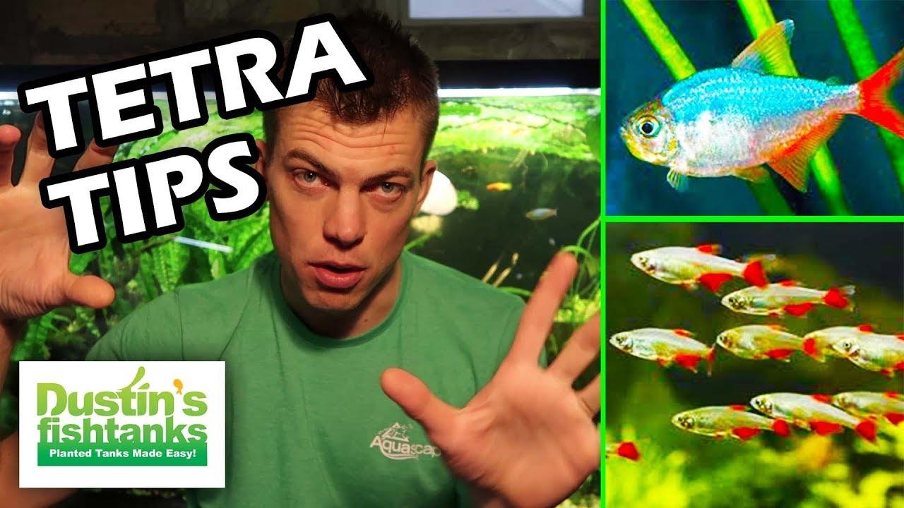 Techno tetra aquarium fish tips tuesday youtube for Dustins fish tanks
