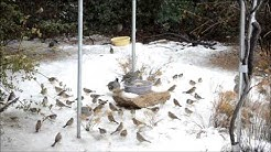 Birds in snow Yarnell Arizona