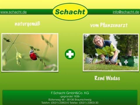 Schacht Gartenpflege: Pflanzenarzt Rene Wadas über Blutläuse am Apfelbaum