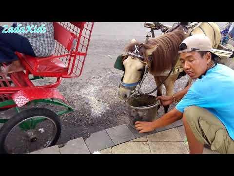Naik Delman Istimewa Lagu Anak Indonesia - Lagu Anak Populer Sepanjang Masa