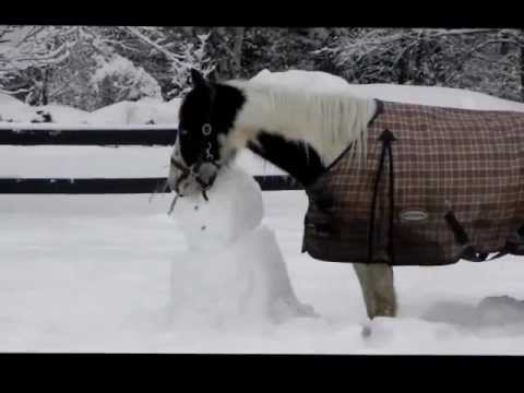 Blue (spotted saddle horse) Meets a Snowman
