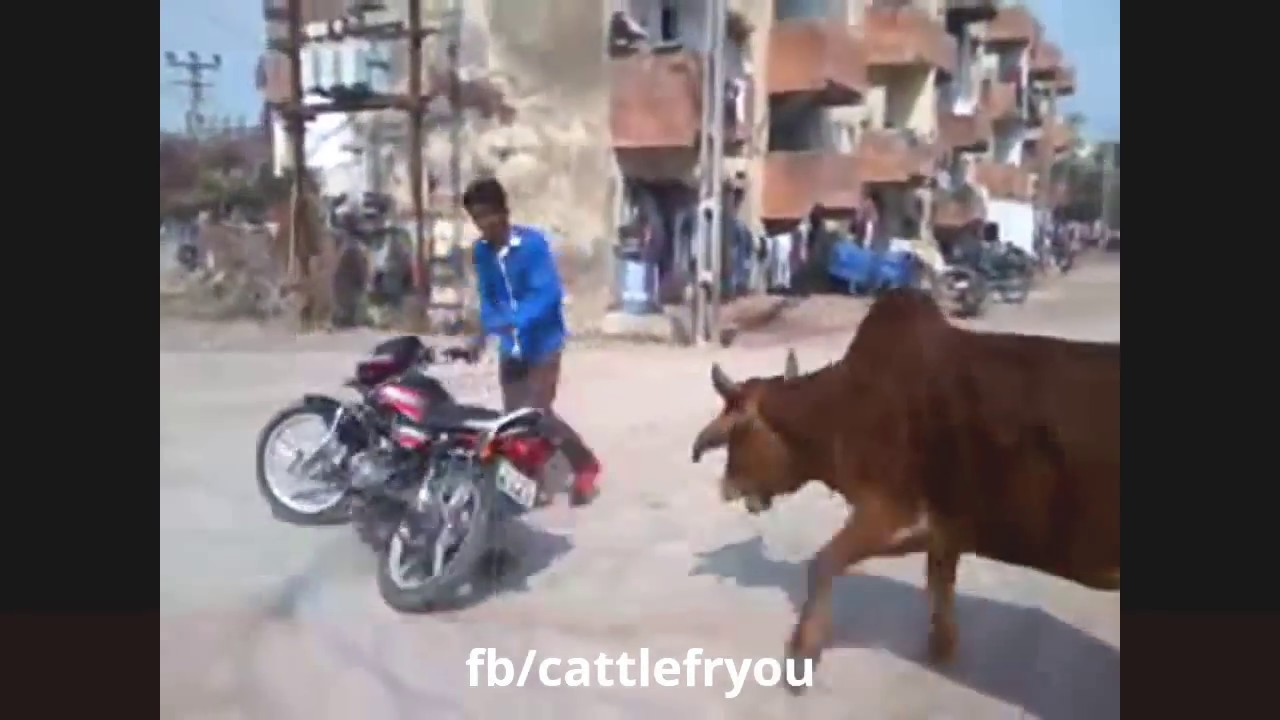 Animals Attack Funny Video ●Best Comedy Animal Fails Compilation 2018◆Funniest vines Completion kids