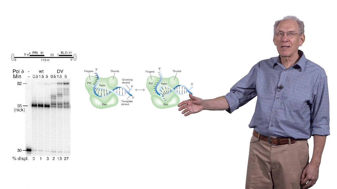 James Haber (Brandeis) 3: Mutations Arising during Repair of a Broken Chromosome