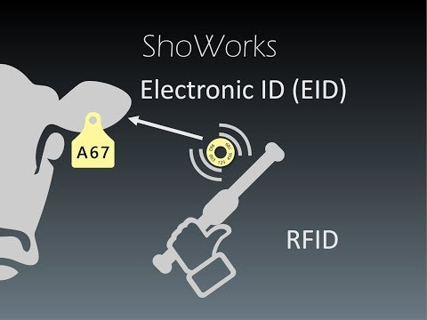 Livestock Identification Using RFID And EID Ear Tags With ShoWorks