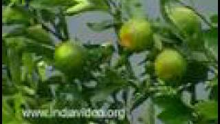 Kanthalloor farm - veritable land of fruits and vegetables Idukki, Kerala