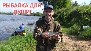 РЫБАЛКА в БЕЛАРУСИ на ФИДЕР Рыбалка на реке Березина Рыбалка для души Фидерная ловля на Березине