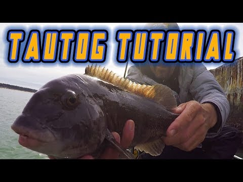 TAUTOG FISHING Tutorial For BEGINNERS (TIPS, TRICKS, TECHNIQUES, HOW TO)