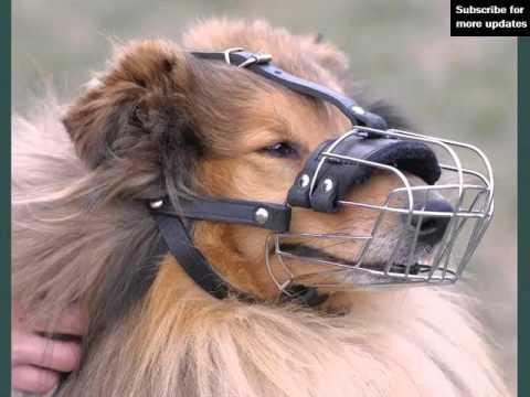 Set Of Useful Picture Ideas Of Dog Muzzle | Dog Muzzle