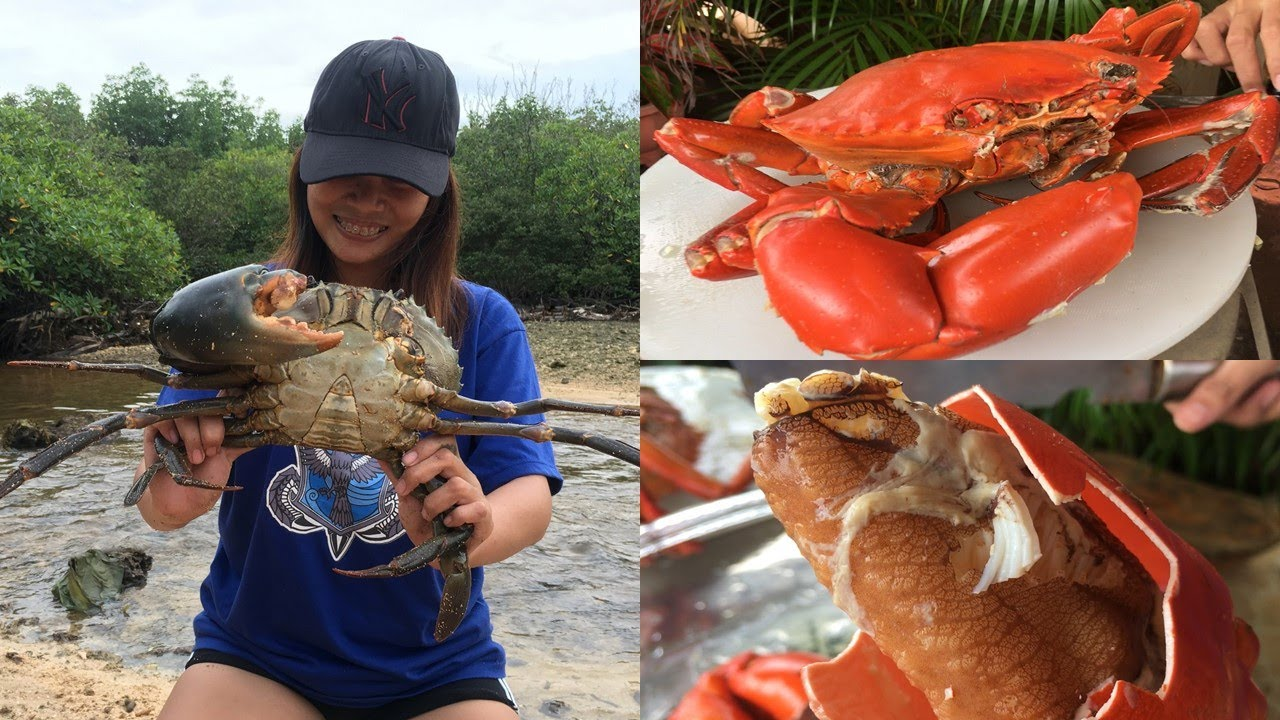Download Giant Mud Crab Catch and Cook