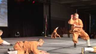 Shaolin Warriors Animal Forms
