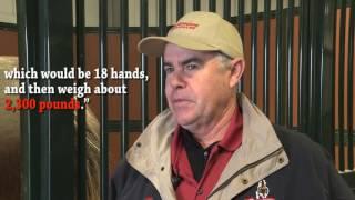 Foaling Season at Warm Springs Ranch