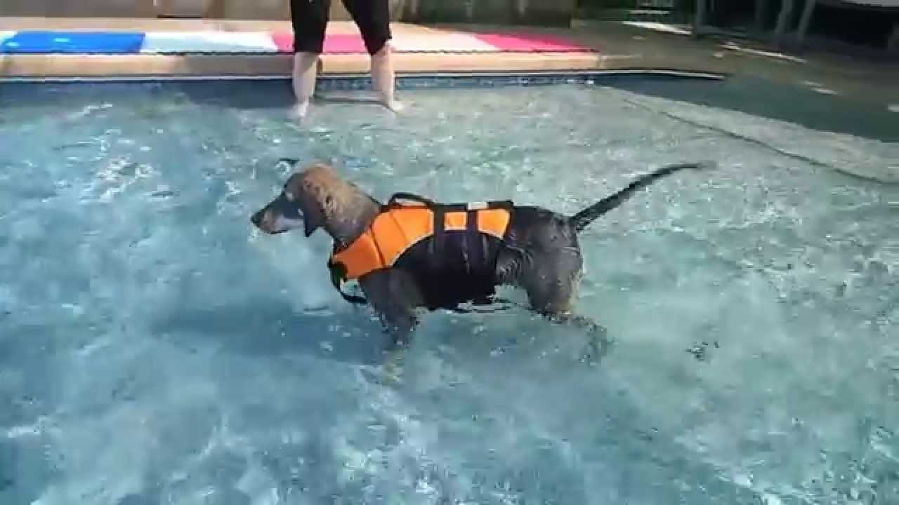 2 hound dog mixes a swimming pool and a chicken summer for Chicken in swimming pool