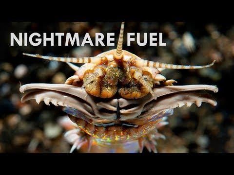 Bobbit Worms: Pure Nightmare Fuel