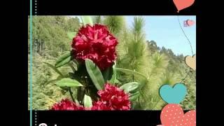 Gambar cover Jonsari song