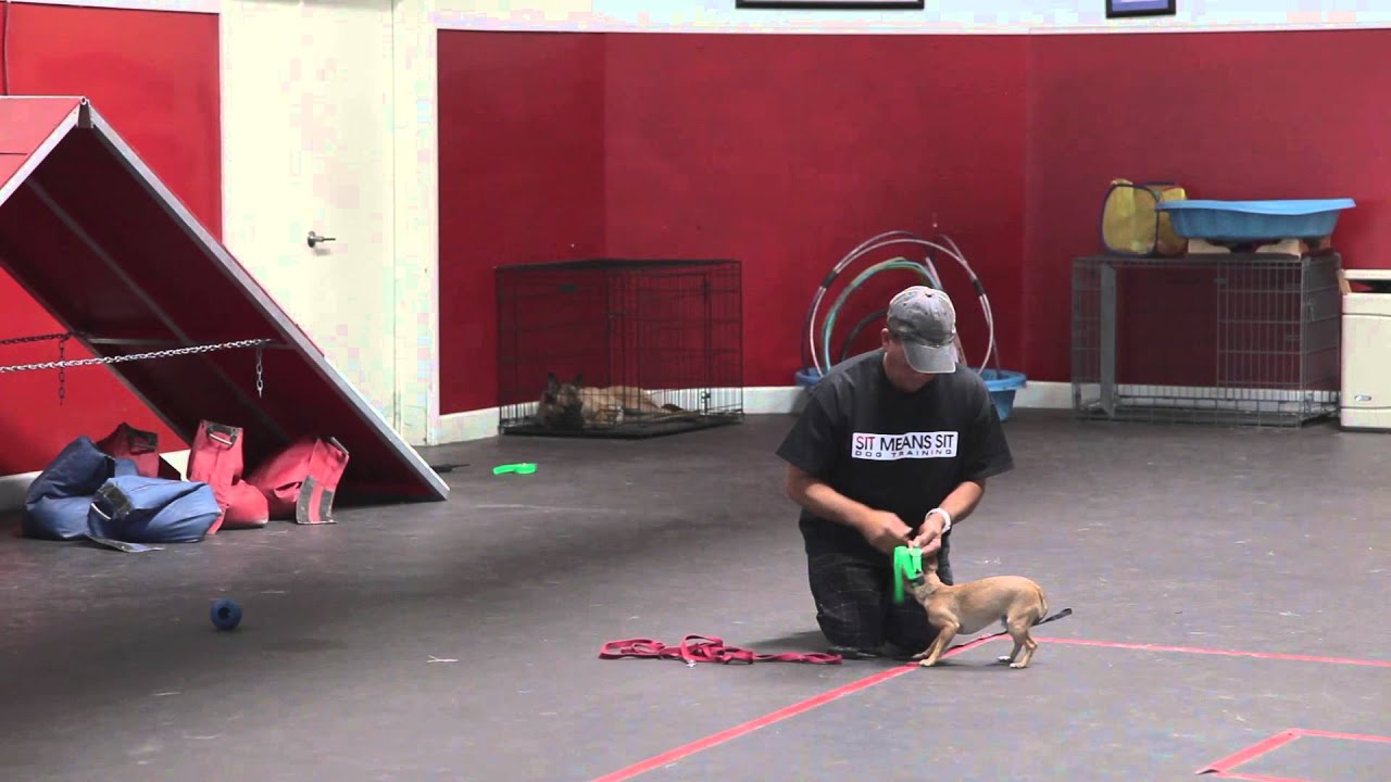 Remote Collar Dog Training Video The Leash Dog Training
