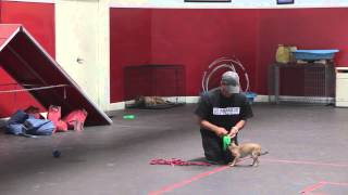 Remote Collar Dog Training Video: The Leash | Dog Training: Episode 2 | Sitmeanssit.com