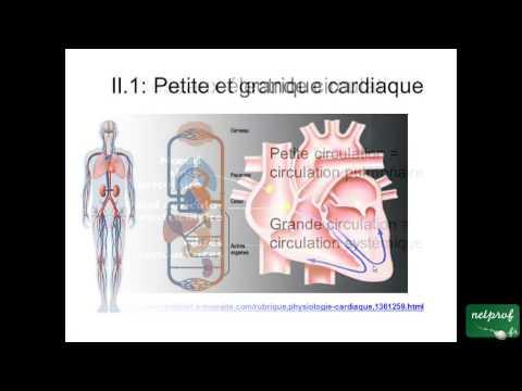 Structure et fonction du coeur