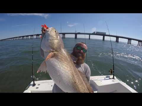 October Red Drum Fishing Chesapeake Bay