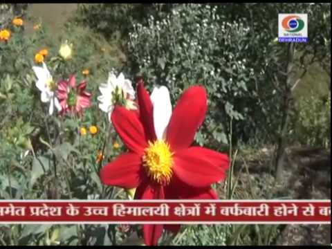 GROUND REPORT HORTICULTURE YOJNA BAGESWAR 18 OCT