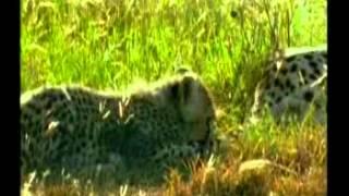 Repeat youtube video Ăn Nuốt Lẫn Nhau Của Loài Động Vật.mpg