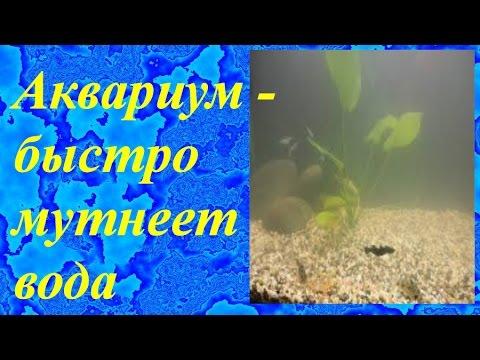 Аквариум -быстро мутнеет вода