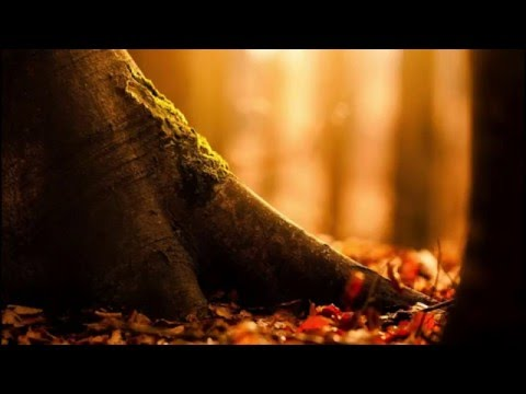 The Best of Baroque 2016 || Baroque music for relaxation, studying and concentration